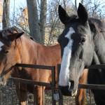 Малыш и лошадь: как познакомить ребенка с лошадками?